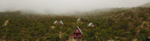 potosi-pines-cabins-in-fog